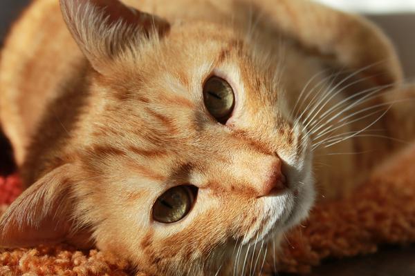 karma dla kota firmy canagan