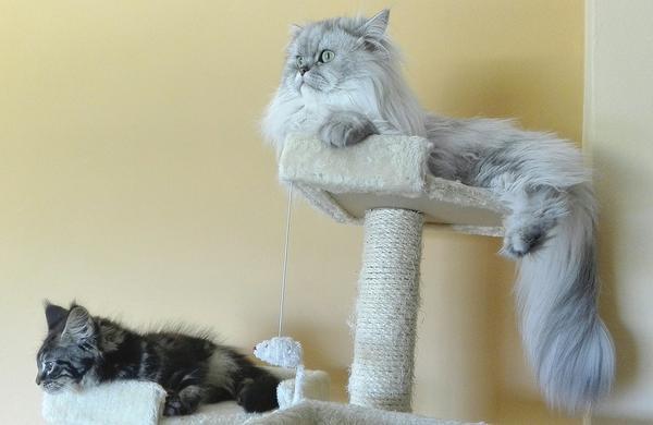 Urozmaicanie życia kota