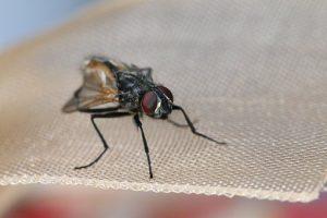 Profesjonalne metody zwalczania insektów