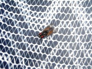 Najlepsze moskitiery na okna