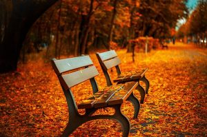Dlaczego ławki w parkach są potrzebne?