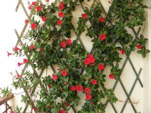Praktyczne ozdoby do ogrodu i nie tylko