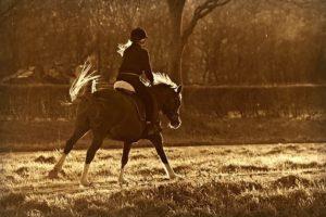 Read more about the article Jak zadbać o bezpieczeństwo podczas jazdy konnej?